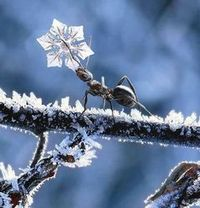 картинка: winter.jpg