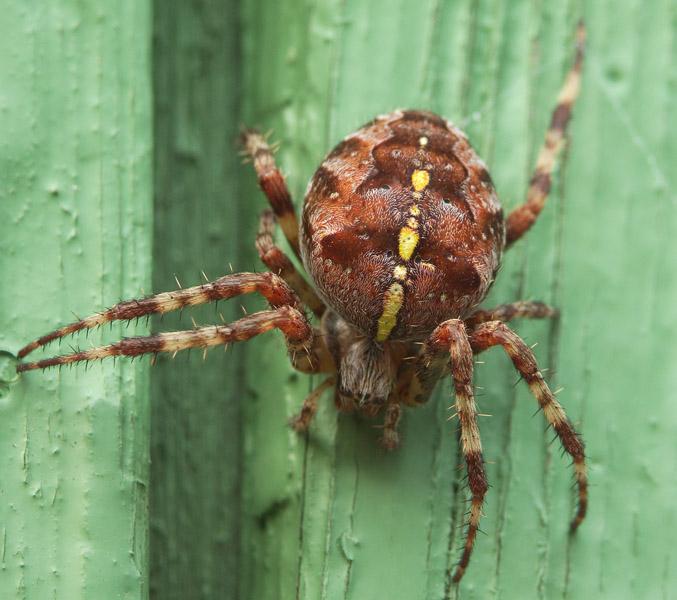 картинка: паук1.JPG