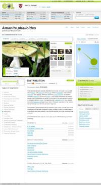 картинка: species_mushroom.jpg