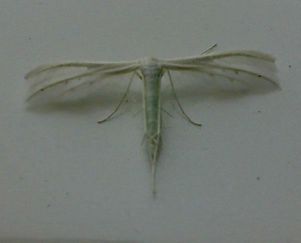 картинка: Insect.jpg