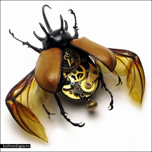 Все форумы > Рисунки насекомых: molbiol.ru/forums/lofiversion/index.php/t226468-50.html