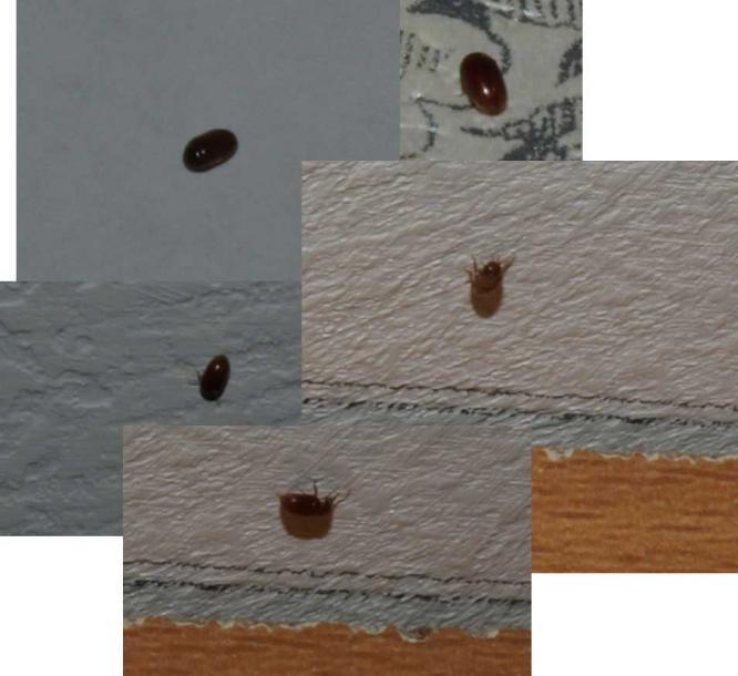 Подозрение картинка 5