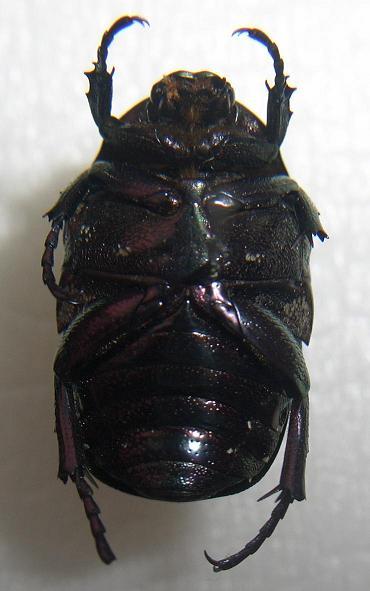 картинка: potosia1.JPG