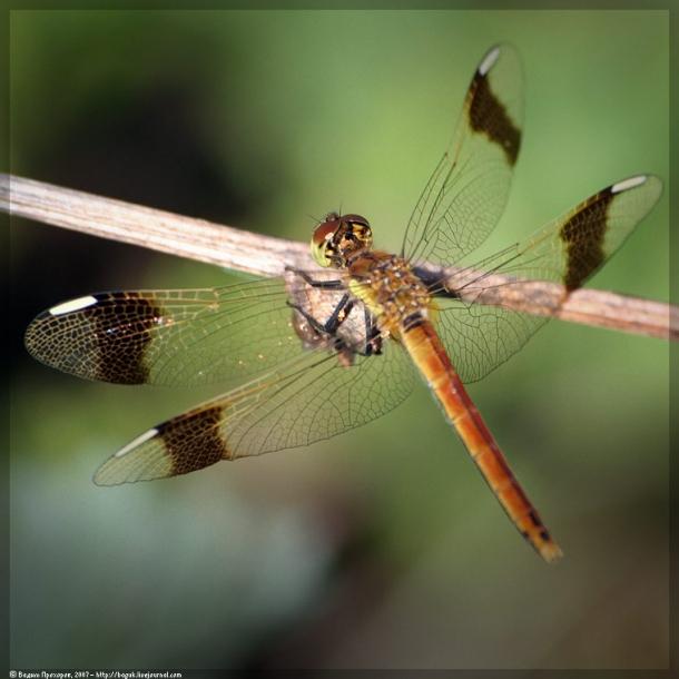 картинка: dragonfly5345.jpg
