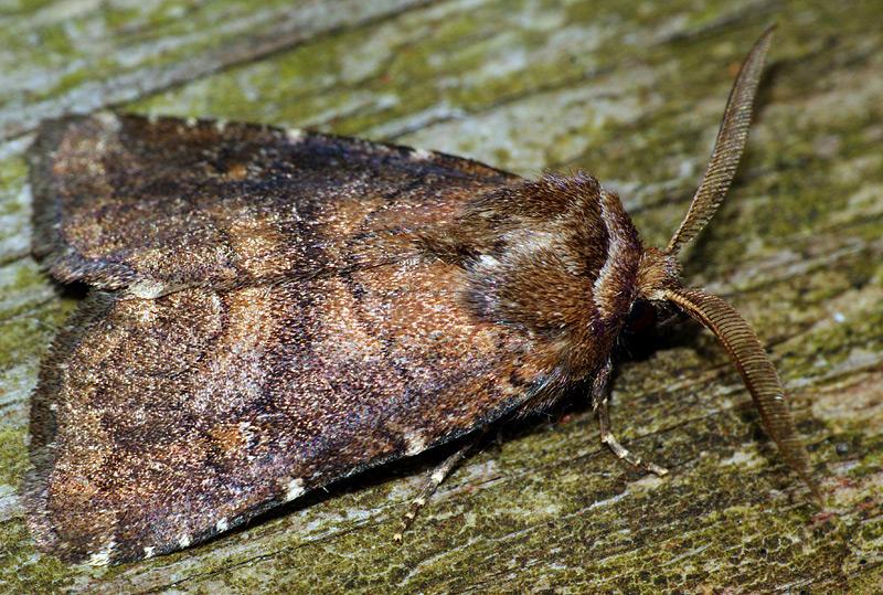названия и западной насекомые фото сибири