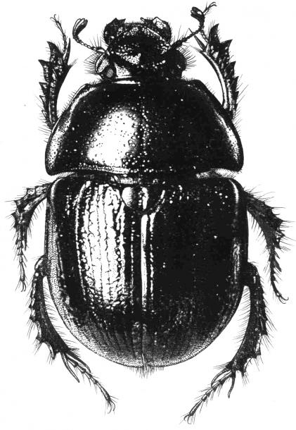 Все форумы > Рисунки насекомых: molbiol.ru/forums/lofiversion/index.php/t226468-100.html