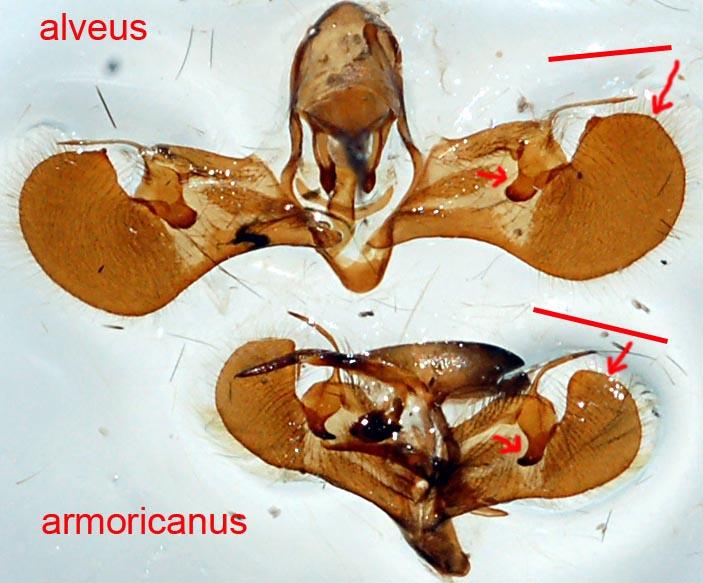 фото аномальные гениталий
