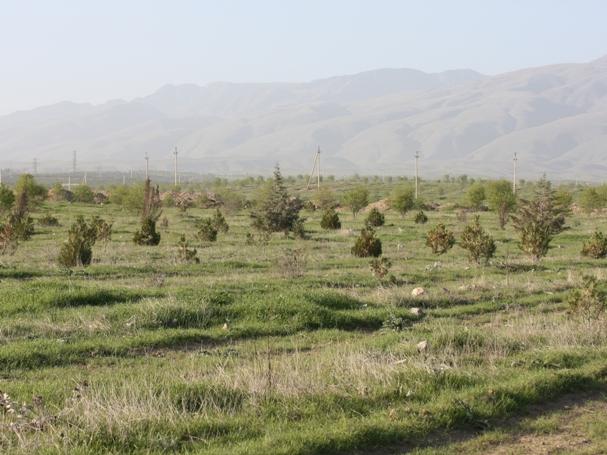 картинка: 30.03.10_Туркменистан.Ашхабад__35_.JPG
