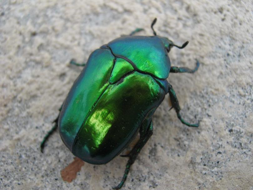 Омский нефтеперерабатывающий сон большой зеленый жук добрым утром