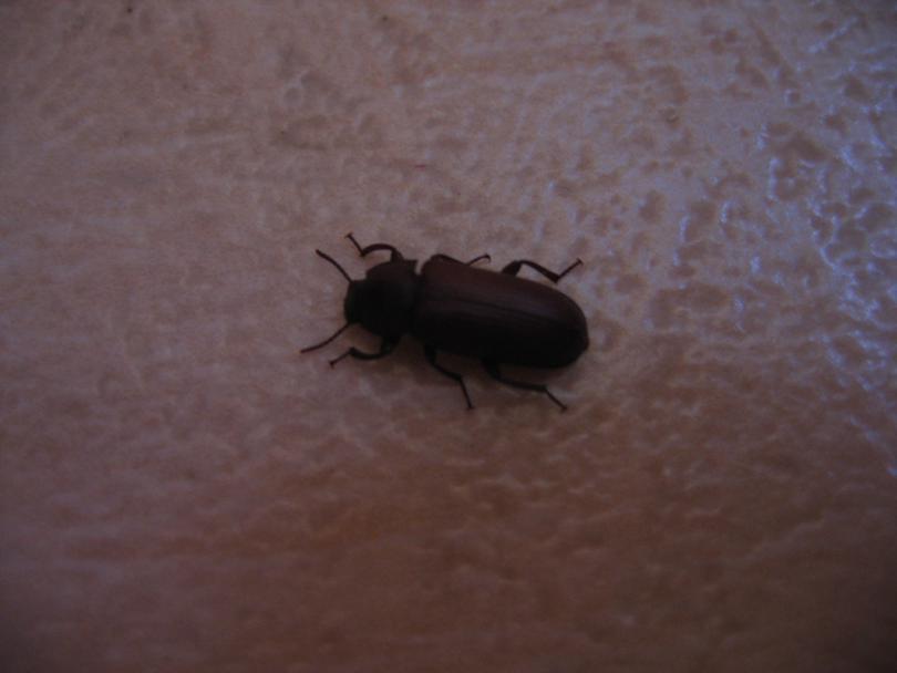 Черные жуки в доме
