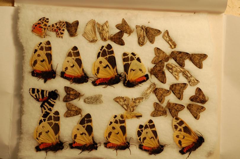 Moths.JPG - кликните, чтобы открыть увеличенную картинку
