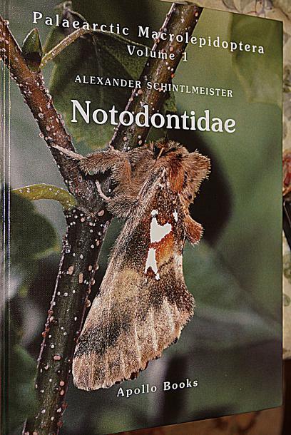 Notodontidae.jpg - кликните, чтобы открыть увеличенную картинку