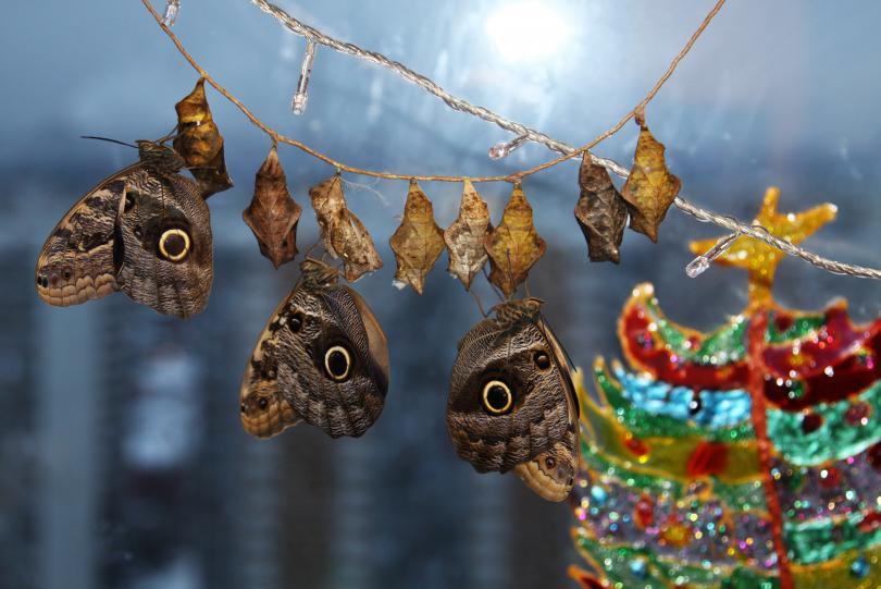 New_2011_Year.jpg - кликните, чтобы открыть увеличенную картинку