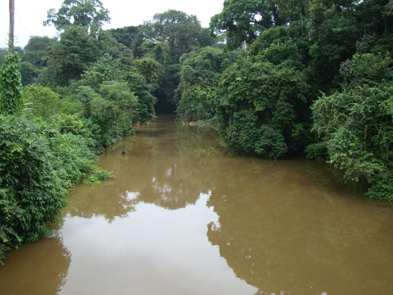 Gabon__2011__324_.JPG - кликните, чтобы открыть увеличенную картинку