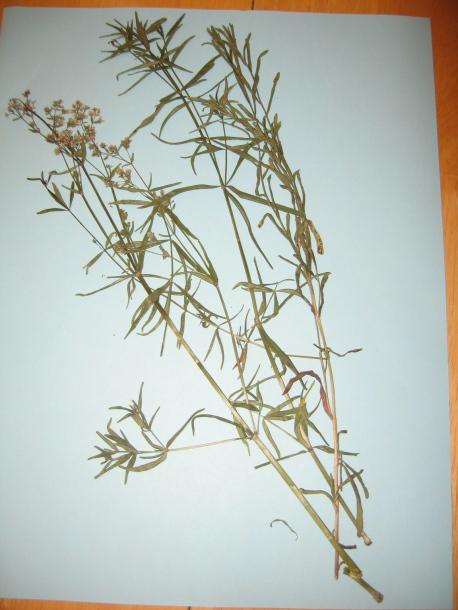 картинка: tc_plants_001.jpg