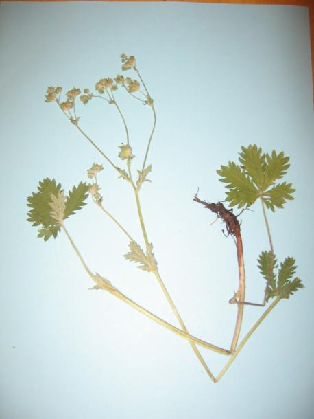 картинка: tc_plants_002.jpg