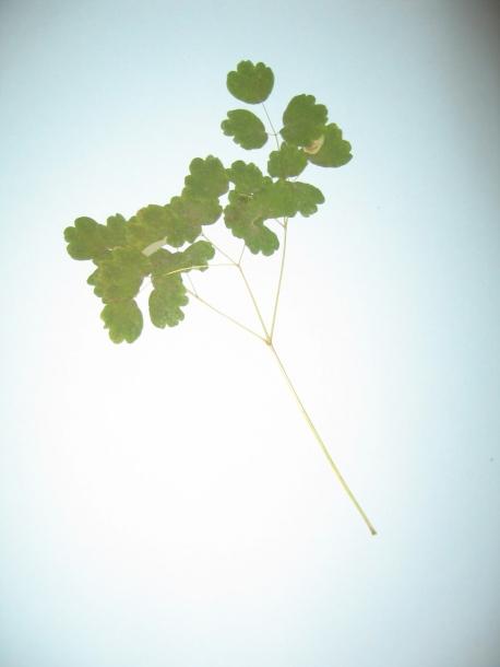 картинка: tc_plants_003.jpg