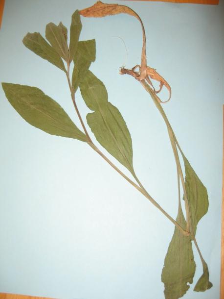 картинка: tc_plants_004.jpg