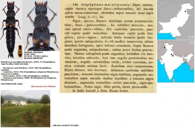 картинка собаки московская сторожевая