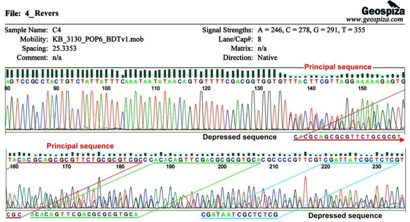 картинка: haplotypes.jpg
