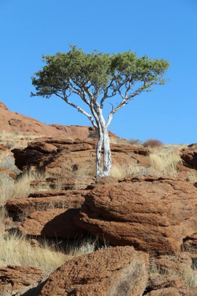 tree_on_roks.jpg - кликните, чтобы открыть увеличенную картинку