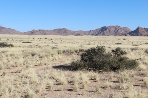 картинка: desert_morning.jpg