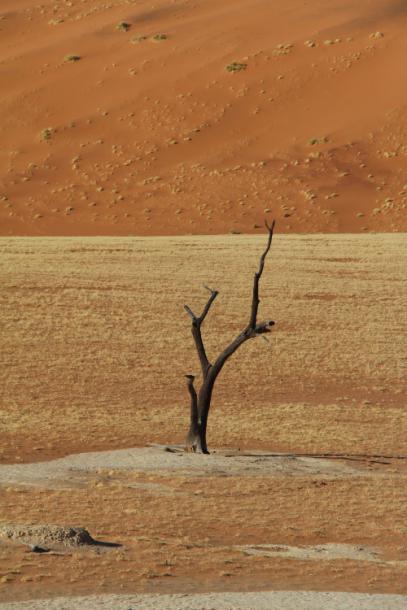 lonely_tree.jpg - кликните, чтобы открыть увеличенную картинку