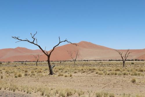 картинка: trees.jpg