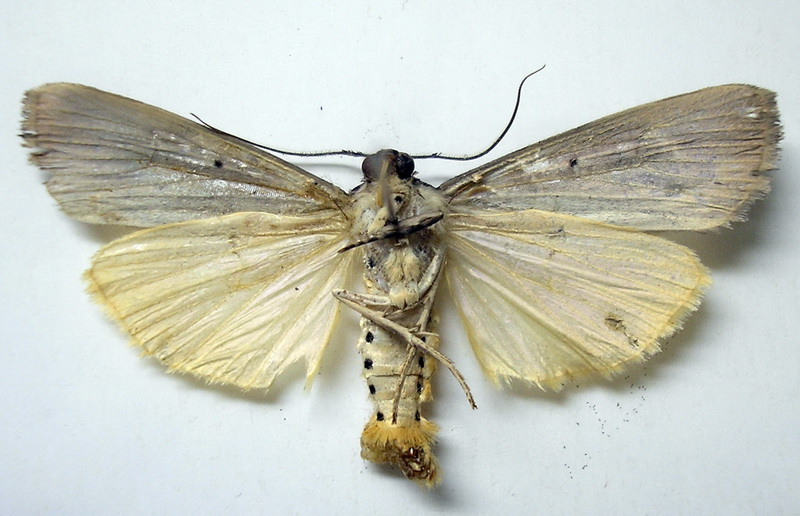 картинка: upperside.jpg