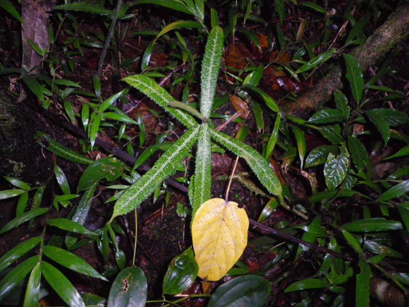 18_plant.jpg - кликните, чтобы открыть увеличенную картинку