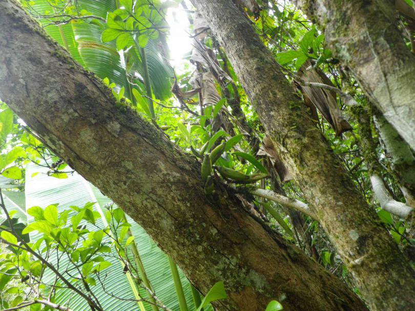 43_orchid01.jpg - кликните, чтобы открыть увеличенную картинку
