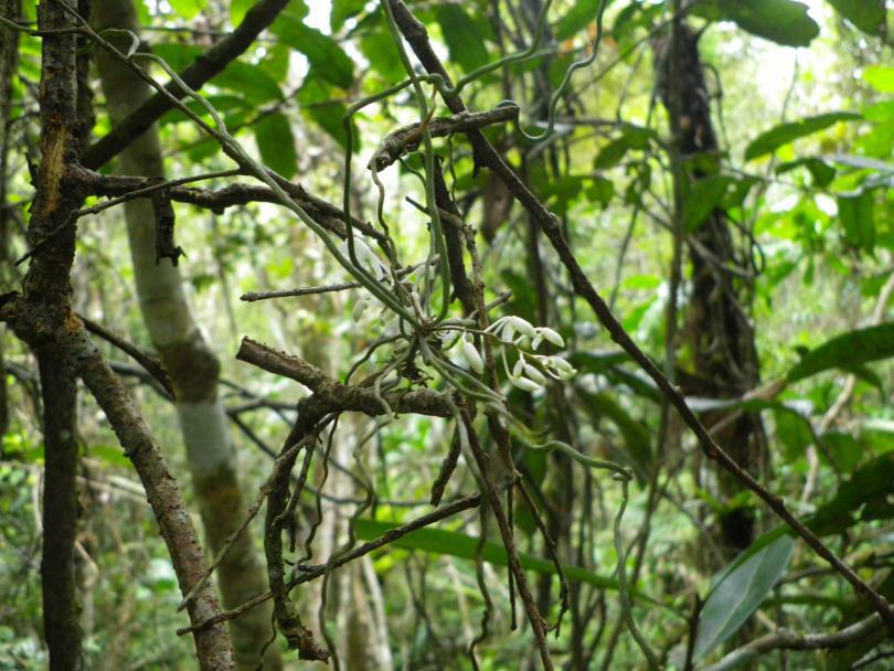 44_orchid02.jpg - кликните, чтобы открыть увеличенную картинку