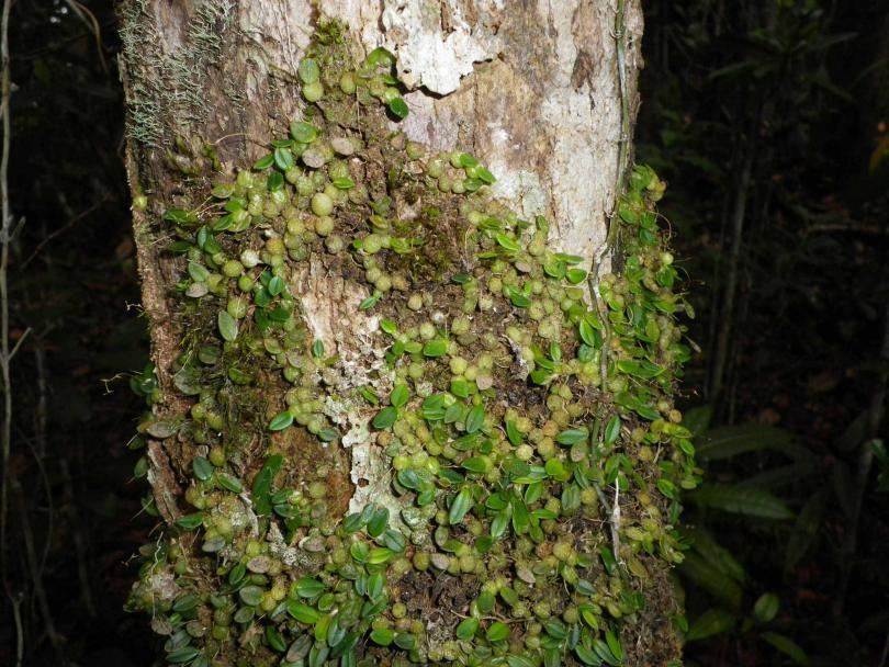 45_orchid03.jpg - кликните, чтобы открыть увеличенную картинку