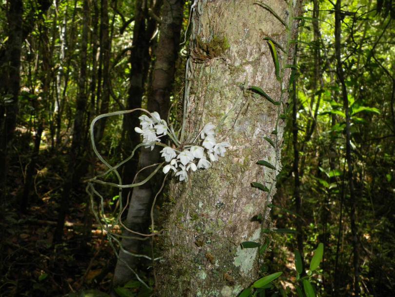 46_orchid04.jpg - кликните, чтобы открыть увеличенную картинку