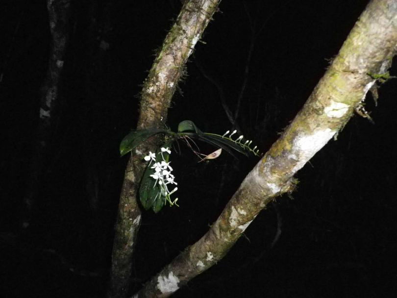 47_orchid05.jpg - кликните, чтобы открыть увеличенную картинку