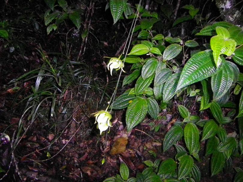 48_orchid06.jpg - кликните, чтобы открыть увеличенную картинку