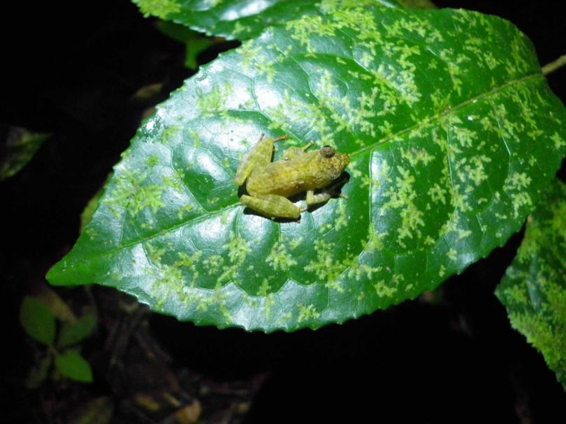 1_frog1.jpg - кликните, чтобы открыть увеличенную картинку