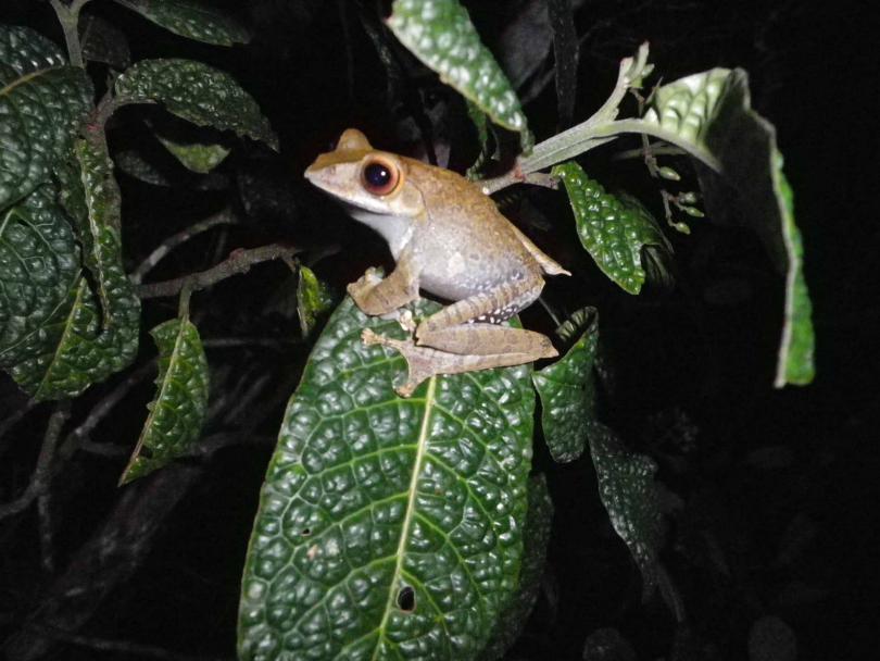 2_frog2.jpg - кликните, чтобы открыть увеличенную картинку