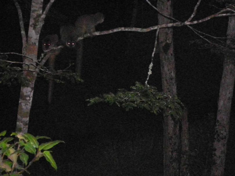 8_lemur4.jpg - кликните, чтобы открыть увеличенную картинку