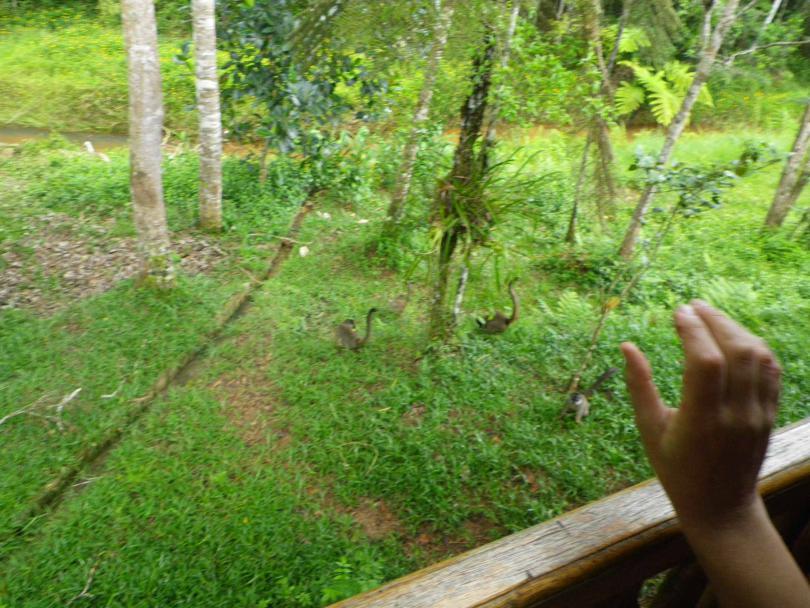 9_lemur5.jpg - кликните, чтобы открыть увеличенную картинку