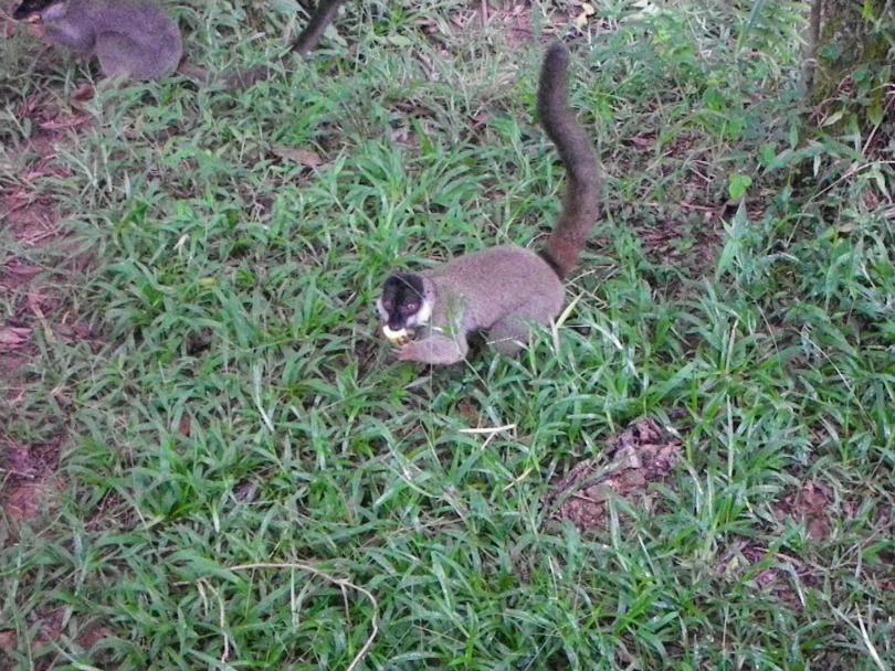 10_lemur6.jpg - кликните, чтобы открыть увеличенную картинку