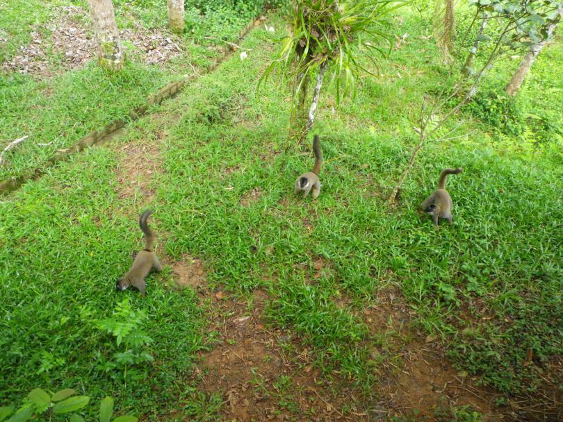 12_lemur8.jpg - кликните, чтобы открыть увеличенную картинку