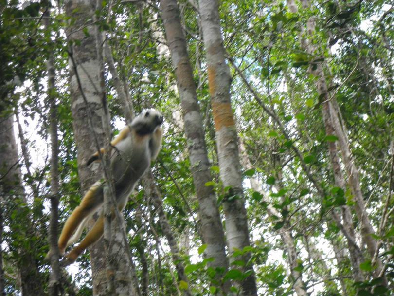 19_lemur3.jpg - кликните, чтобы открыть увеличенную картинку