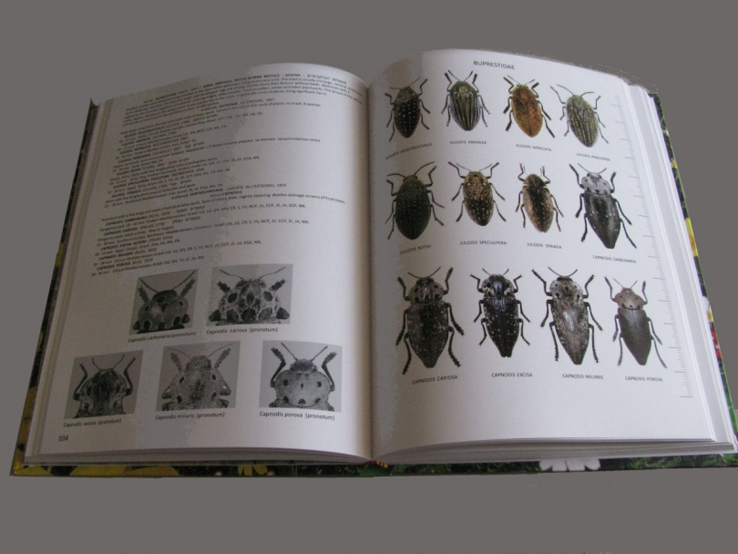 картинка: Atlas_Beetles_of_Israel_2.jpg