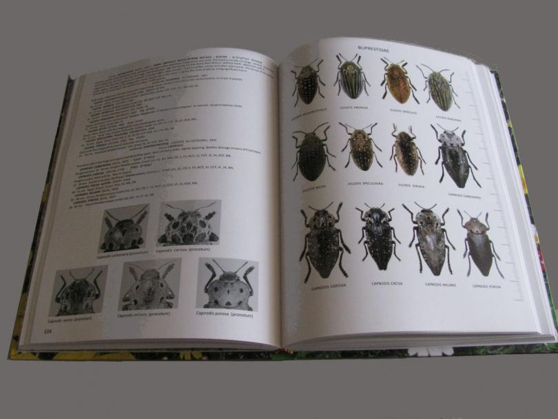 картинка: Atlas_Beetles_of_Israel_2.jpg