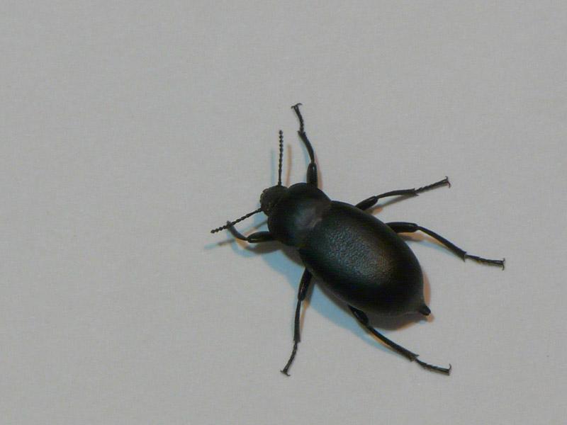 картинка: Insecta_98.1__800_.jpg