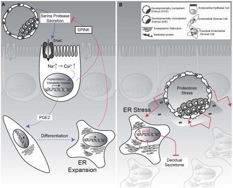 Selection_of_Human_Embryos.jpg - кликните, чтобы открыть увеличенную картинку