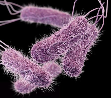 картинка: Salmonella.png
