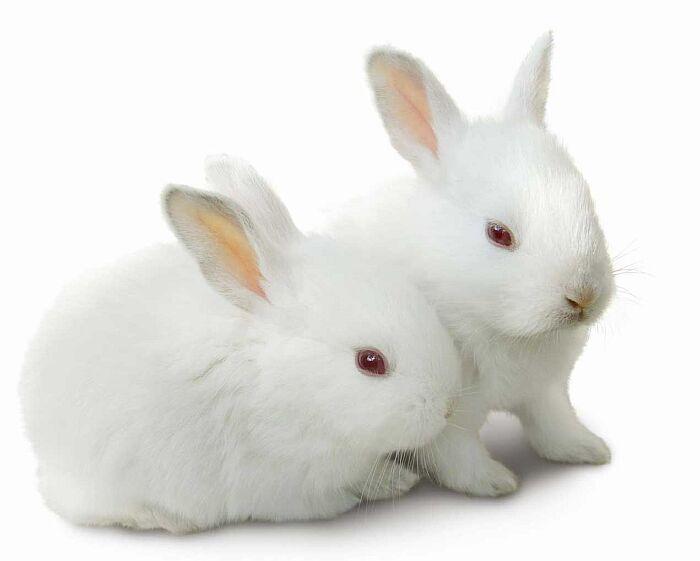 картинка: rabbits.jpg