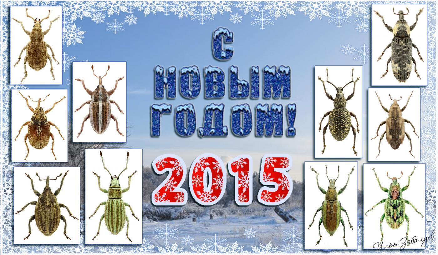 2015.jpg - кликните, чтобы открыть увеличенную картинку